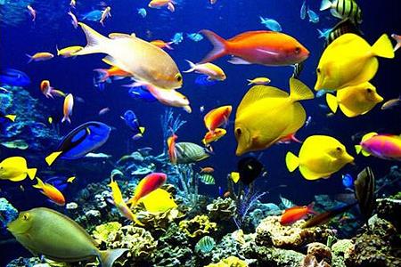 【曼谷暹海底世界】门票 水族馆 5d 电影  爆米花 汽水 玻璃船(儿童价