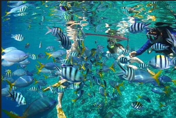 壁纸 海底 海底世界 海洋馆 水族馆 602_402