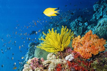 马来西亚沙巴美人鱼岛rs度假村浮潜一日游 儿童