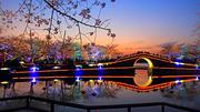 无锡3日自由行(5钻)·【太湖美·赏樱季】双飞·住苏宁环球凯悦 可选鼋头渚