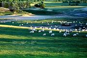 天津出发:草原天路全景、中都原始草原、天鹅湖纯玩二日游