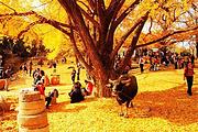 中国随州千年银杏谷/人气摄影地/秋天之美,美在银杏一日游