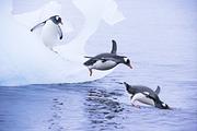 阿根廷-南极16日跟团游