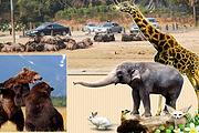 亲子游特惠!常州香格里拉大酒店1晚+双早 淹城野生动物园/恐龙园等多套餐可选
