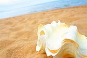 沙滩之美汕尾红海湾沙滩入住红海湾维也纳酒店^美味自助双早餐+风车岛