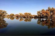 喀什巴楚红海景区胡杨林一日游