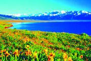 环北疆全景.无自费+天池+喀纳斯+禾木+魔鬼城+那拉提+巴音布鲁克+ 吐鲁番