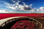 沈阳出发 盘锦红海滩廊道景区一日游 含景区观光车
