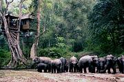 昆明西双版纳4日游|澜沧江快艇❀野象谷❀普洱国家森林公园❀中缅边境打洛小镇