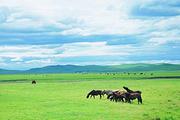100%无强消>内蒙古鄂尔多斯草原一日游含中餐魅力草原.暑期特惠