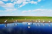 <鹤城齐齐哈尔2日游>扎龙自然保护区、龙沙动植物园、北大荒鲜花港、和平广场