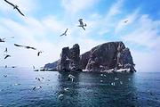 中秋国庆 避暑 山东烟台海岛 长岛月牙湾 九丈崖 海豹苑蓬莱 4日跟团游
