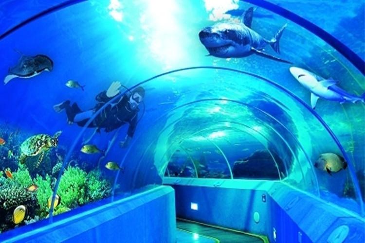 山东旅游             日照奇趣海洋世界 非购物点