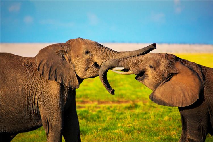 肯尼亚动物大迁徙12日|阿布岱尔公园 纳瓦沙湖 马赛马拉2晚五星酒店