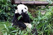 快乐游春节香港澳门5天4晚/亲子游/海洋公园/维多利亚海港/大三巴牌坊/