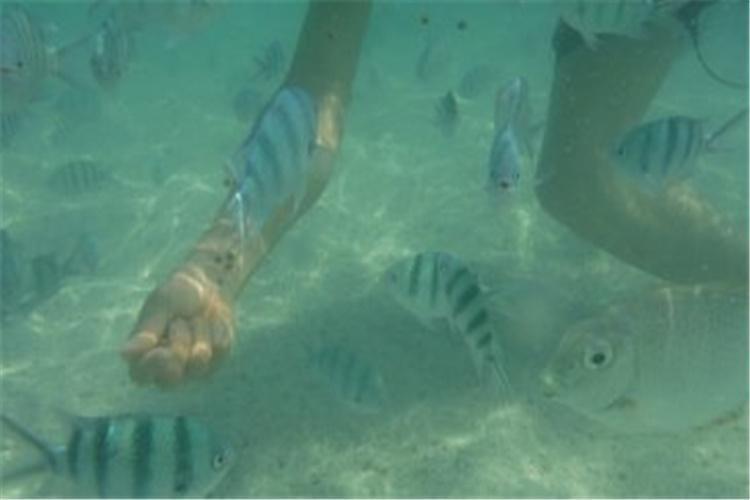 谷迪岛坐落于沙美岛东北,拥有大片的珊瑚礁和丰富的海洋生物,非常适合