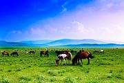 内蒙古赤峰贡格尔草原.玉龙沙湖.黄岗梁森林公园.越野穿越草原体验纯玩双卧4日