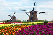 赏花季-你一定不能错过的美丽     ---七彩小镇、亚洲植物园一日游