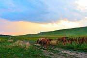 玩转塞外深度游木兰围场塞罕坝+乌兰布统纯玩3日+烤羊|越野车穿越草原