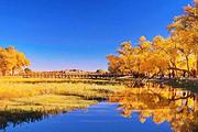 童话额济纳+苍天圣地阿拉善+黑水城+双胡杨林+居延海+怪树林银川往返双飞6日