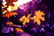 乐吧|早知有盘山,何必下江南。秋日红叶遍山林