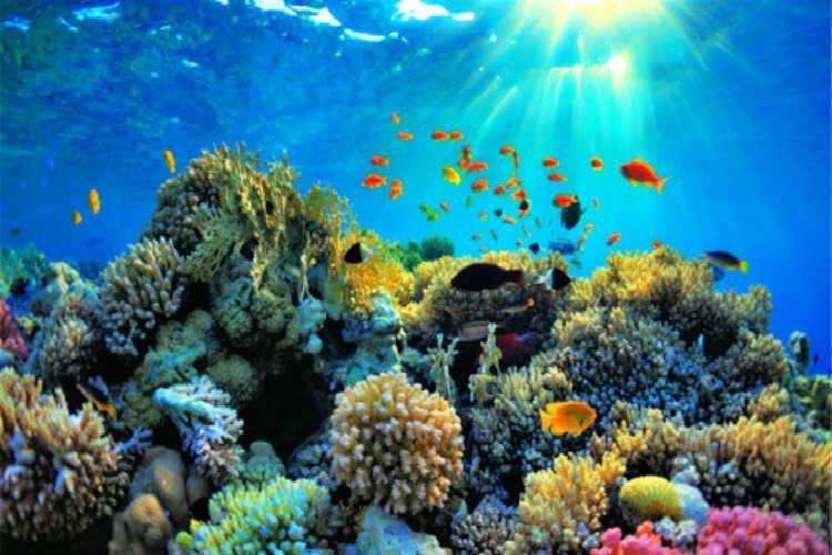 浮潜,玻璃底船,香蕉船,独木舟,甜甜圈,下午茶等等 浮潜 蓝梦岛海水
