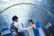亲子蜜月游任选三亚海棠湾天房洲际酒店3天2晚海底餐厅午餐/接机/超多亲子活动