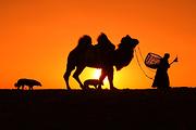 0自费!北疆全景!新疆、喀纳斯、伊犁、那拉提、塞里木湖、吐鲁番、天池10日游