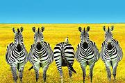 国航配联运|全新升级1晚特色茅草屋+1晚酒庄区酒店!南非特色8-10天!
