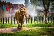 淄博周边惠民游  济南野生动物园1日游 含车费+导服猛兽区动力小火车