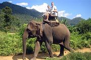 泰国清迈美旺大象营骑大象-大象洗澡+黑森林餐厅半日游 中文导游+接送