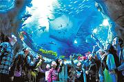 约会海洋|香港海洋公园2天1晚自由行|住如心南湾海景酒店 +海洋公园门票