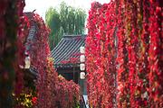 纯净古北-深度游日游+夜景,北京古北水镇纯玩一日游,推荐游览司马台长城