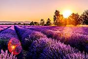 南法12日定制游(尼斯蔚蓝海岸+摩纳哥王宫+戛纳老城)