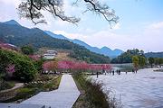 武汉出发 信阳步步娇玻璃桥+桃花谷+西河景区精品纯玩二日游  赠送旅游保险