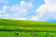 纯玩无购物🔥呼伦贝尔草原,满洲里,额尔古纳3日游♥赠送千元大礼包+住蒙古包
