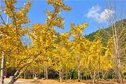 韶关南雄帽子峰银杏林、西约都坡村、罗坑水库大草原亲近大自然二天团