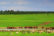 呼伦贝尔出发大草原+额尔古纳湿地+莫日格勒河+网红喊泉一日游 赏草原湿地美景