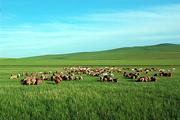 希拉穆仁草原1日大巴跟团游赠送草原礼包、酒店接服务、赠送草原烤羊腿(6人以上团体报名)