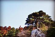 洗心之旅南岳衡山两日游,花一开就想爱吧!吃住全包+门票
