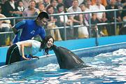 <纯玩无购物>青岛极地海洋世界、五四广场、栈桥一日游 一票畅游 看海豚表演