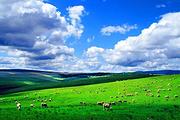 经棚起止贡格尔草原+黄岗梁国家+森林公园阿斯哈图石林一日游