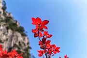 <黄山+宏村3日游>纯玩!山顶2人间看最美日出 市区四星酒店 高铁站免费接送