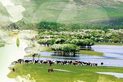 呼伦贝尔大草原、额尔古纳湿地 1日游(纯玩团、无购物)