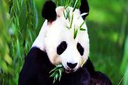 久等啦成都、九寨沟、黄龙景区、若尔盖草原、熊猫乐园双飞6日游