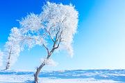 玩嗨大东北<雪乡2人暖炕>温泉酒店、吉林雾凇+长白山+哈尔滨+亚布力+雪乡