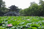 真纯玩|泡温泉,住特色山庄|鼋头渚,赏樱花|乌镇,南浔,周庄,甪直,上海杭州