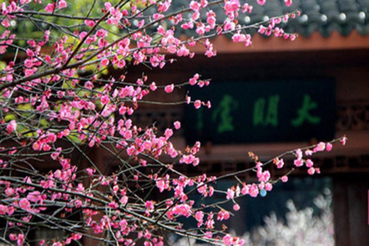 余杭区超山风景区位于杭州市东北29公里处,连接104国道和320国道的09