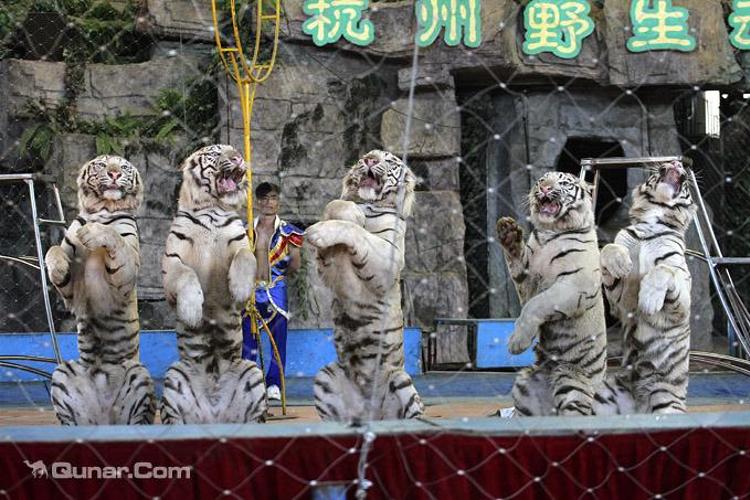 温州出发杭州野生动物园自由行攻略