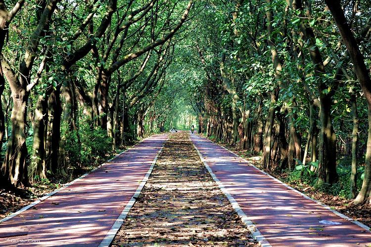 大夫山森林公园旅游